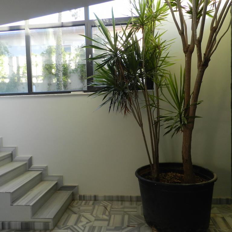 Modern Real Estate Inside Kundu Antalya 16